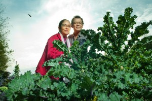 A thicket of kale surrounds researcher Eduardo Jovel and PhD student Alannah Young Leon at UBC Farm. Photo by Martin Dee